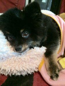 Cuddly Sumo