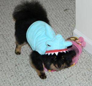 Sumo Shark